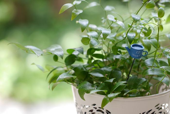 植物もイキイキ