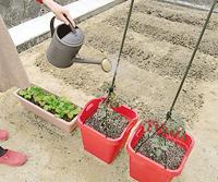 苗から野菜を育てる場合
